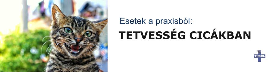 tetvesseg_cica